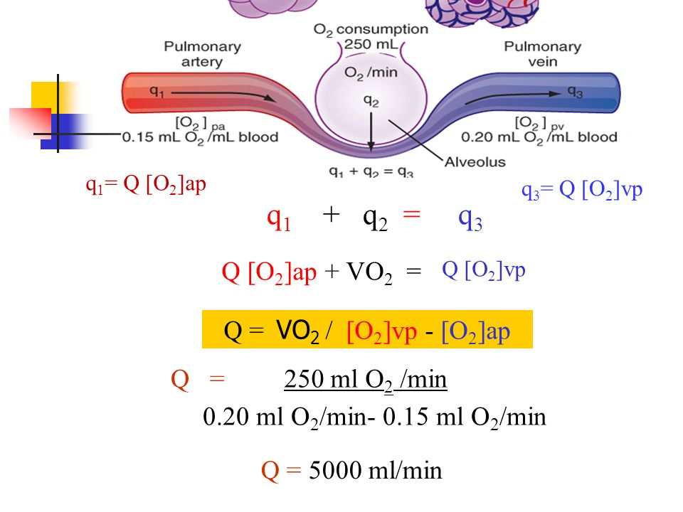 q1 + q2 = q3 Q [O2]ap + VO2 = Q = VO2 / [O2]vp - [O2]ap 250 ml O2 /min